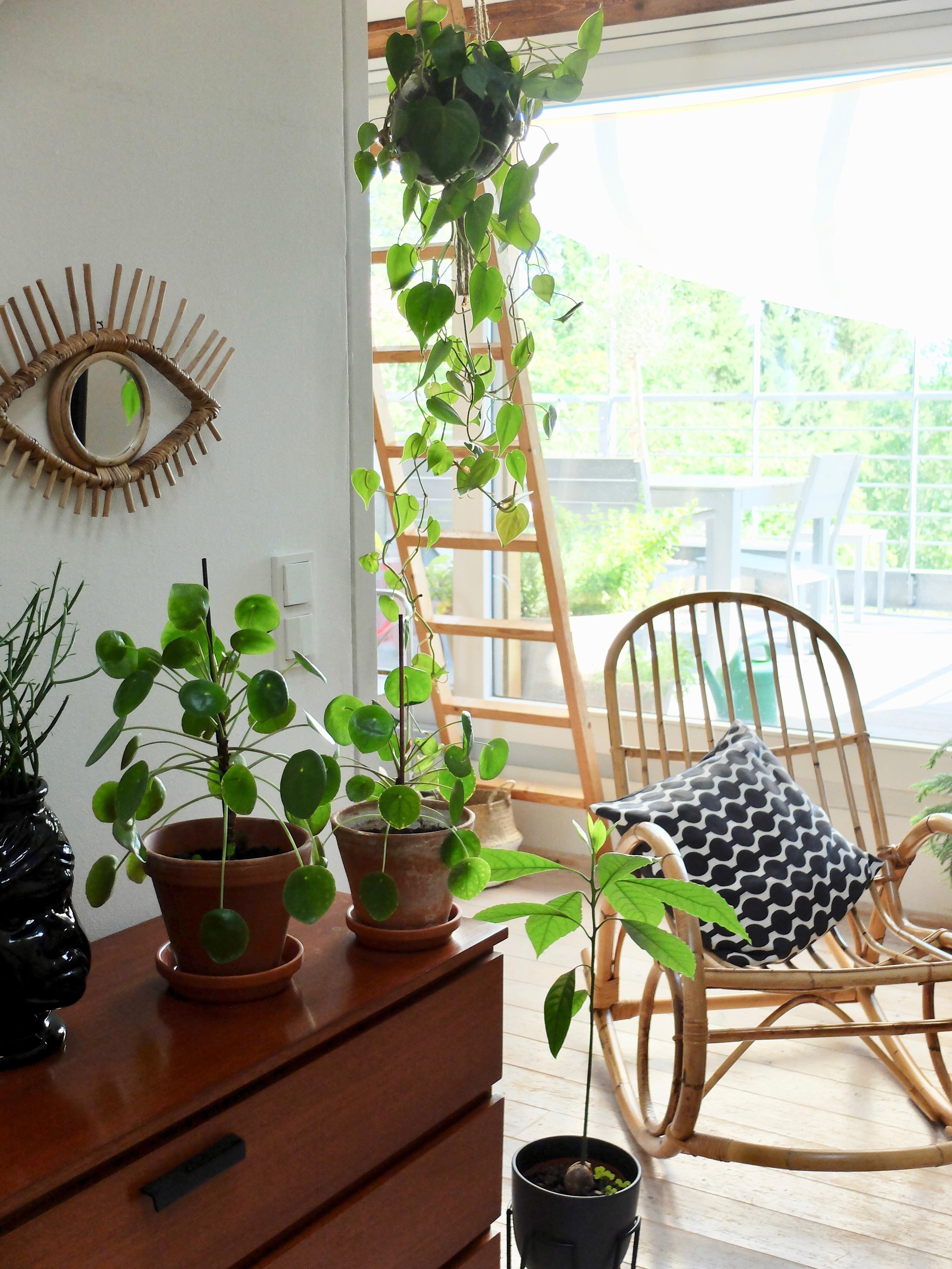 Dschungel Bilder Ideen Couch