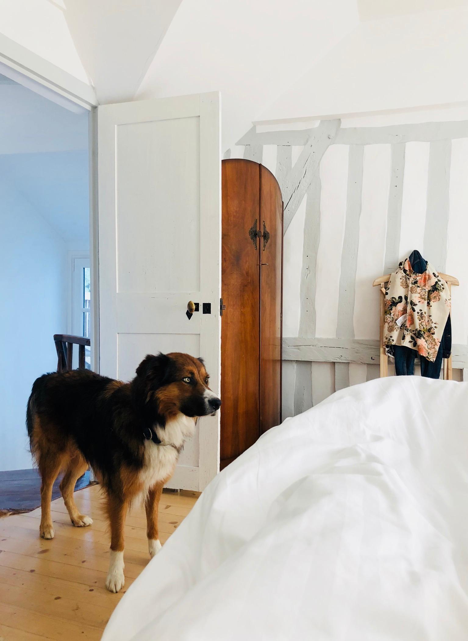 Unser Tierischer Wecker In Unserem Haeuschen In Der Normandie Schlafzimmer  Fachwerkhaus Cottage Bett 4571857c 035d 4cbe