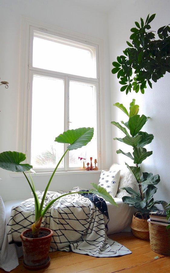 Urban Jungle ●