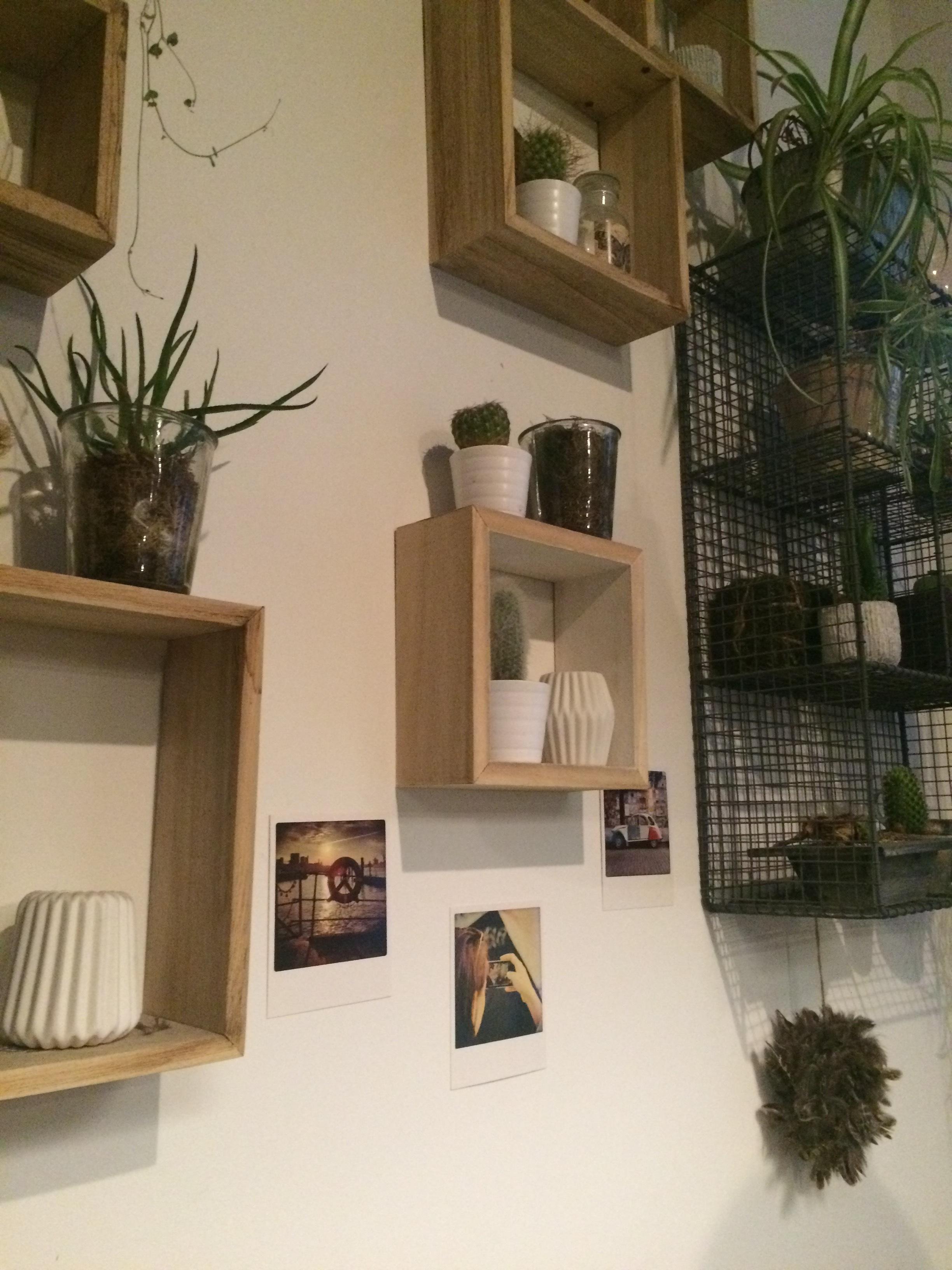 urban jungle an der wand im wohnzimmer regal wohnz. Black Bedroom Furniture Sets. Home Design Ideas