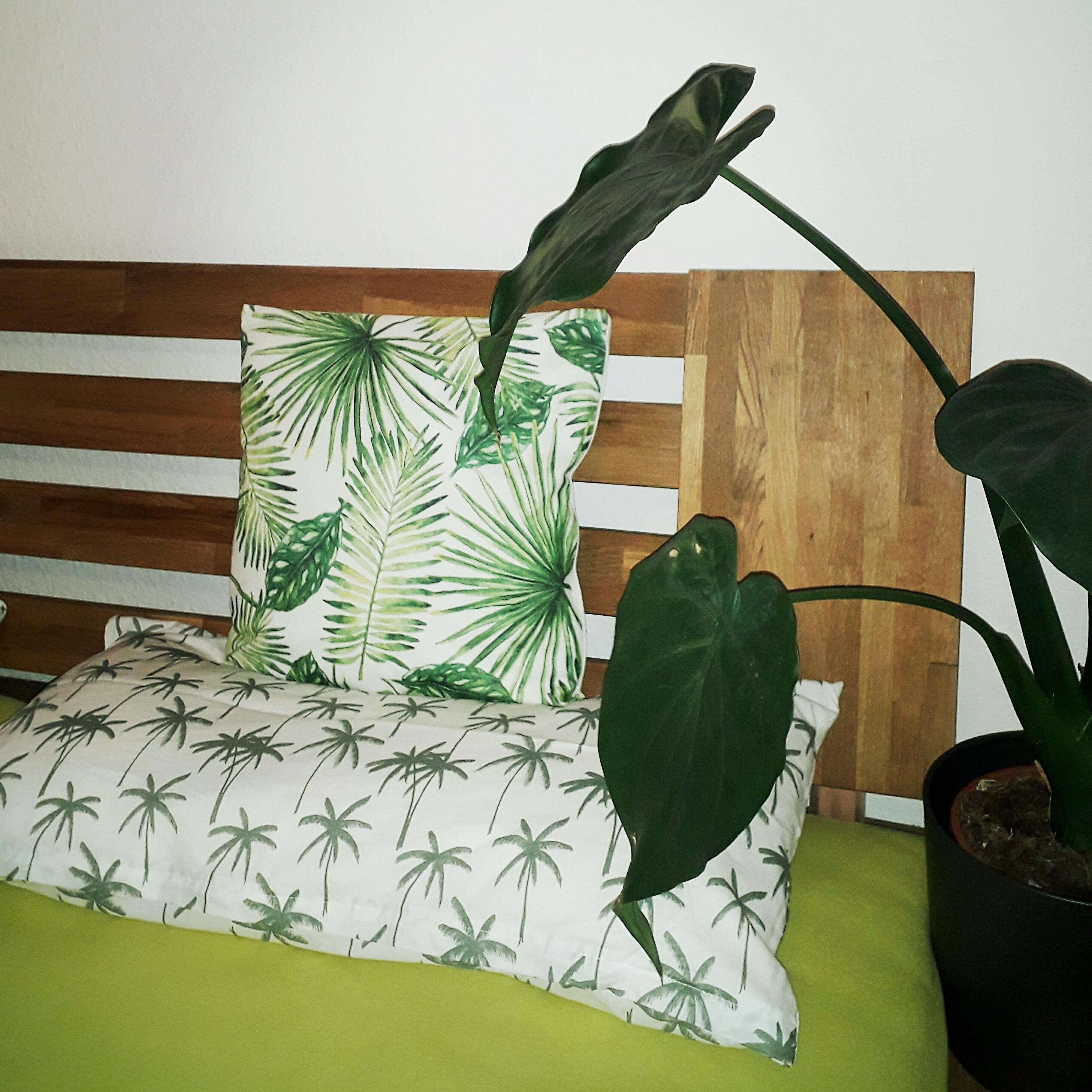 Urban jungle in the bedroom ???