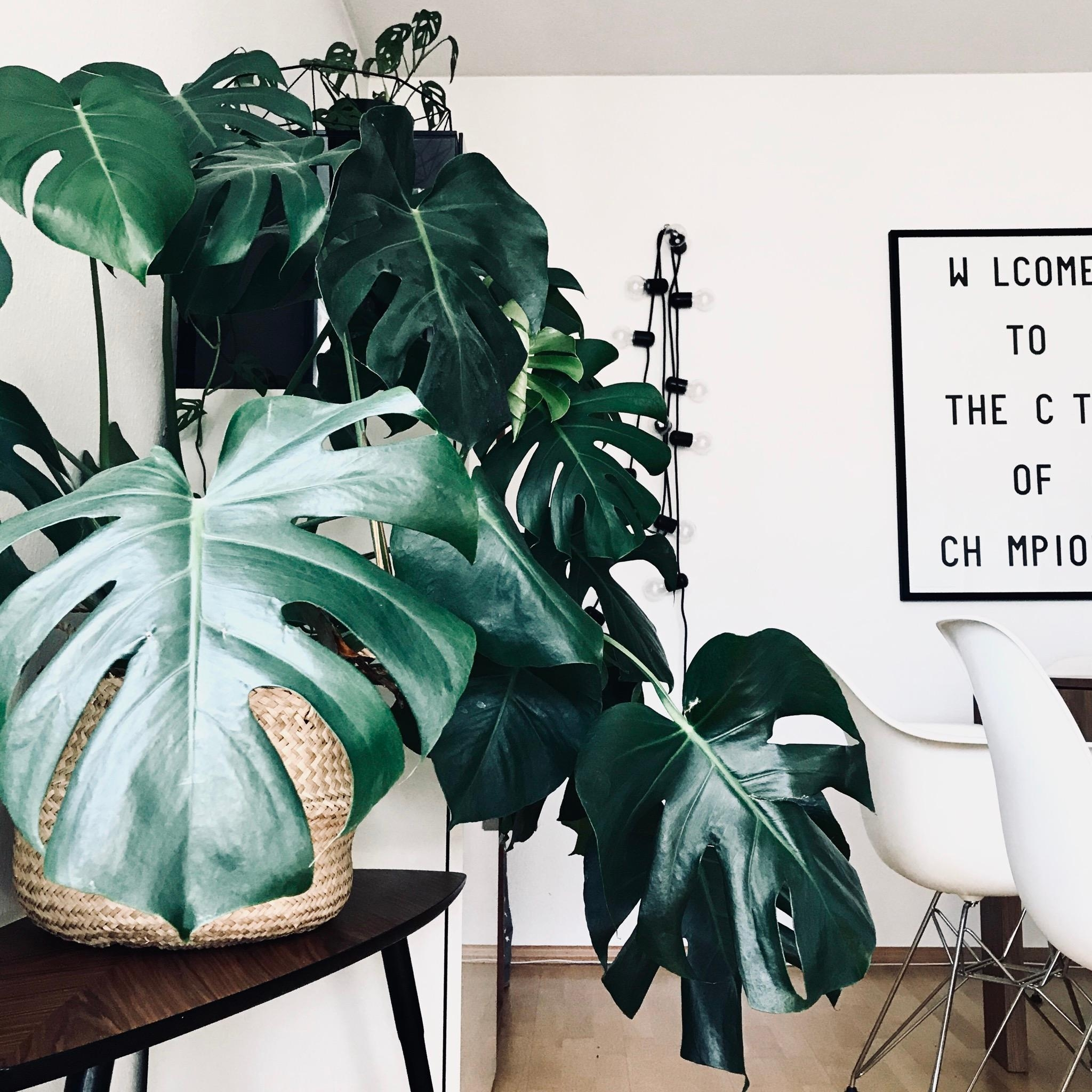 Urban Jungle.