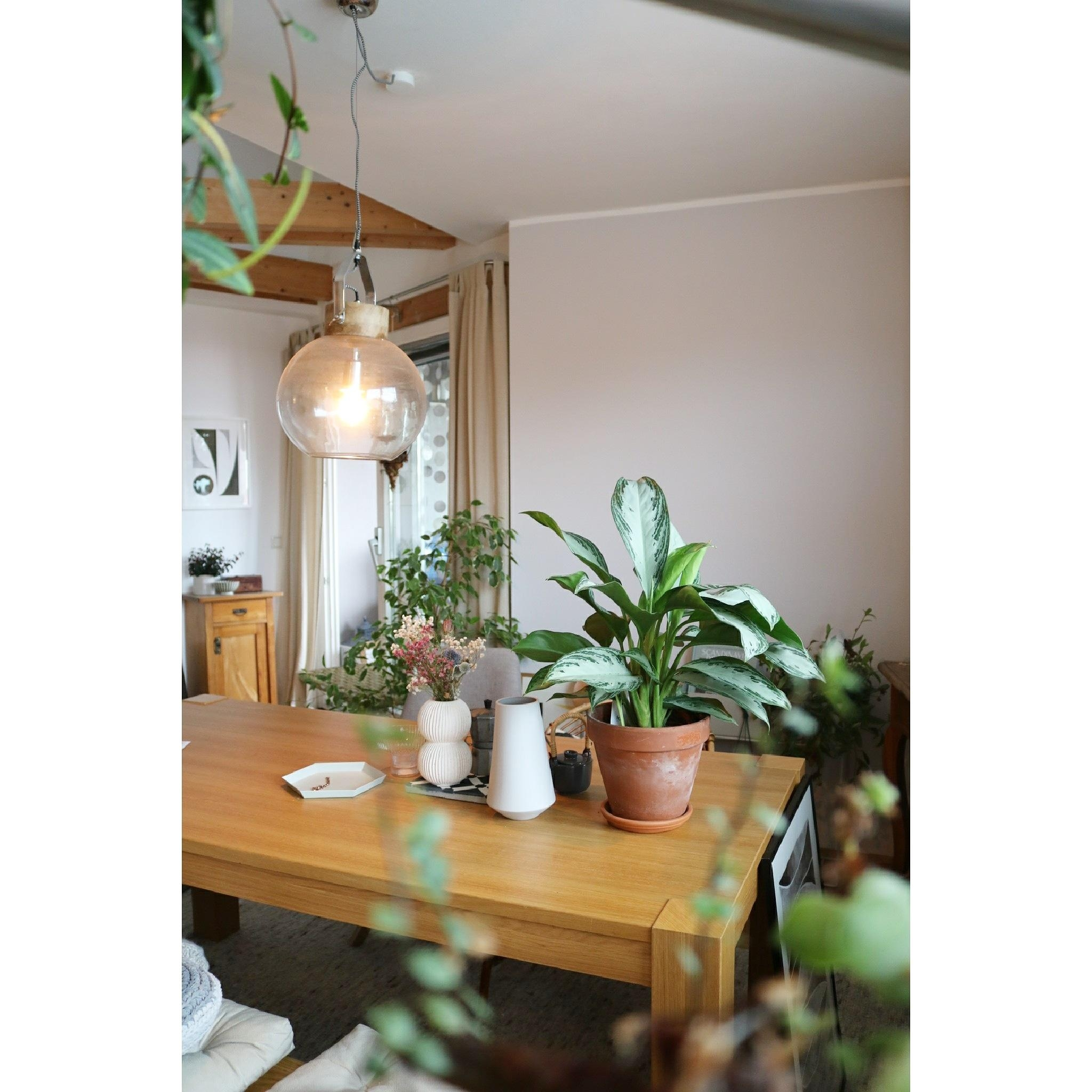 #urbanjungle #greenliving #green #interior #myhome #plants #diningroom #onthetable #design #hygge