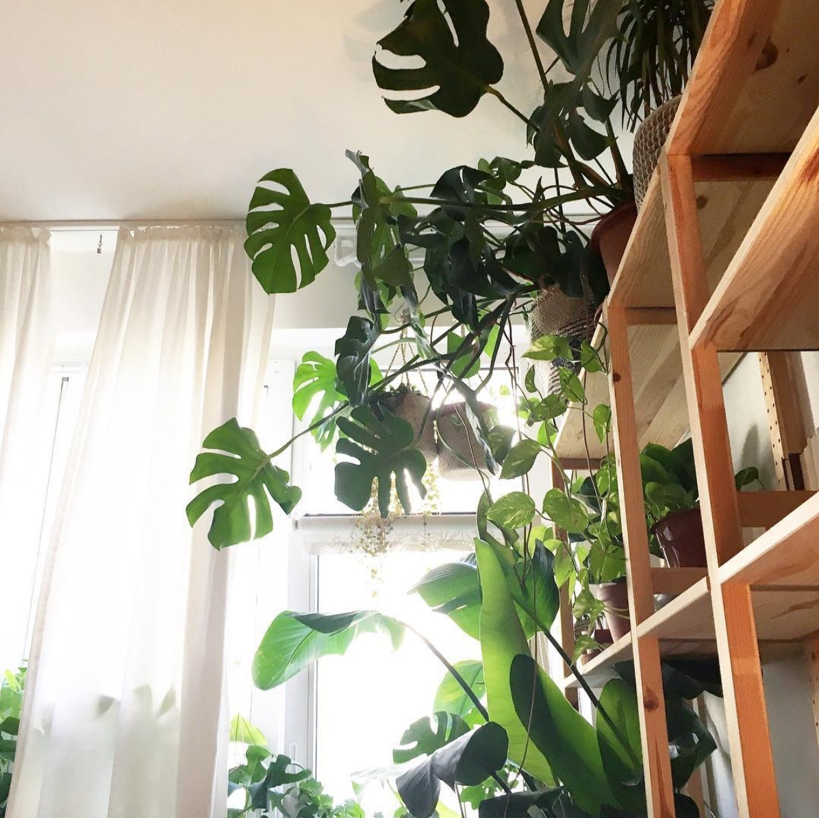 Welcome to the jungle 🌿🍃 #monstera #plants #plantlover #einrichtung #zimmerpflanzen #urbanjungle #schlafzimmer