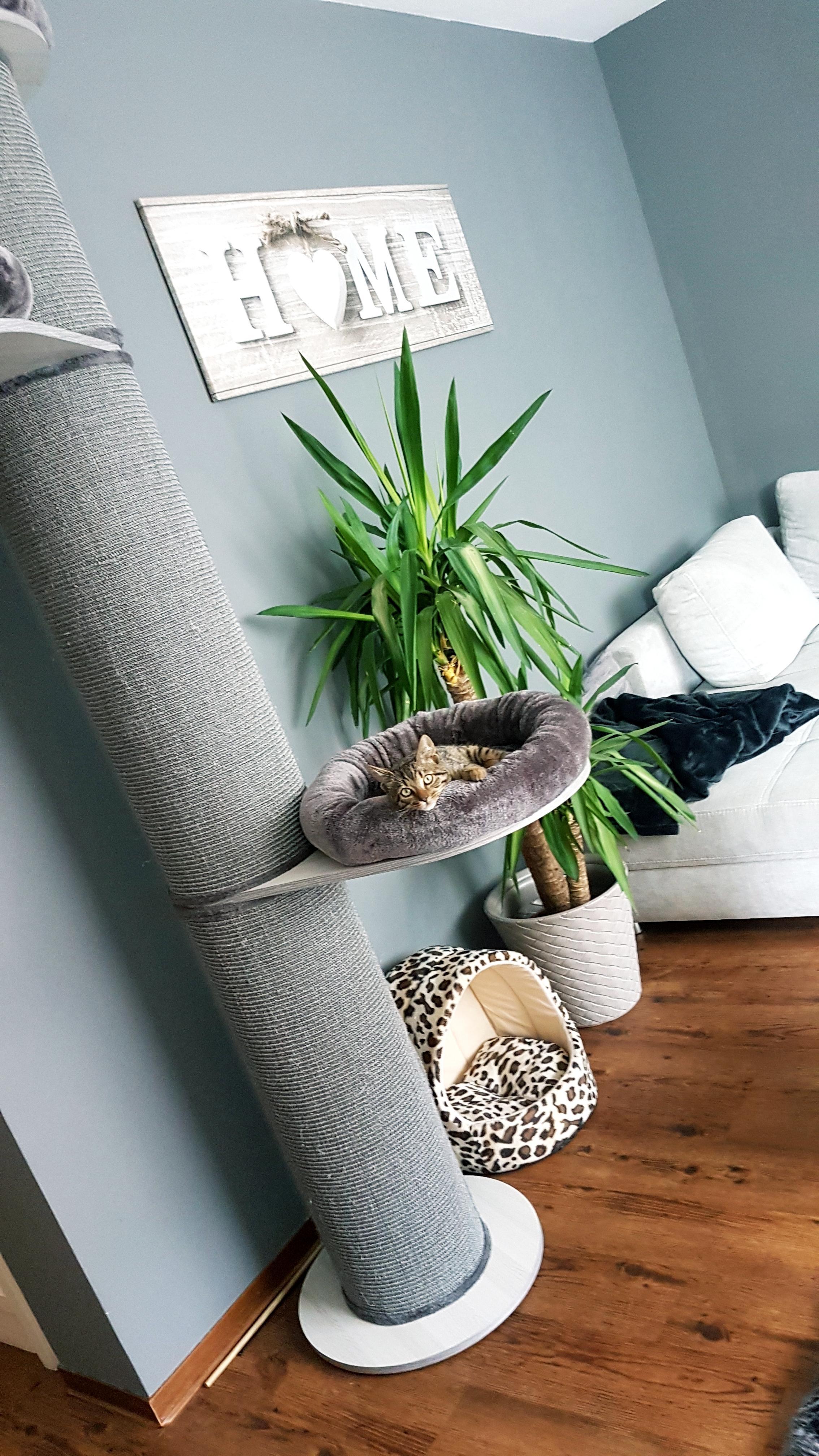 Wenn Der Kleine Sich Sogar Wohlfühlt😍#couchliebt #kratzbaum #deko #möbel #