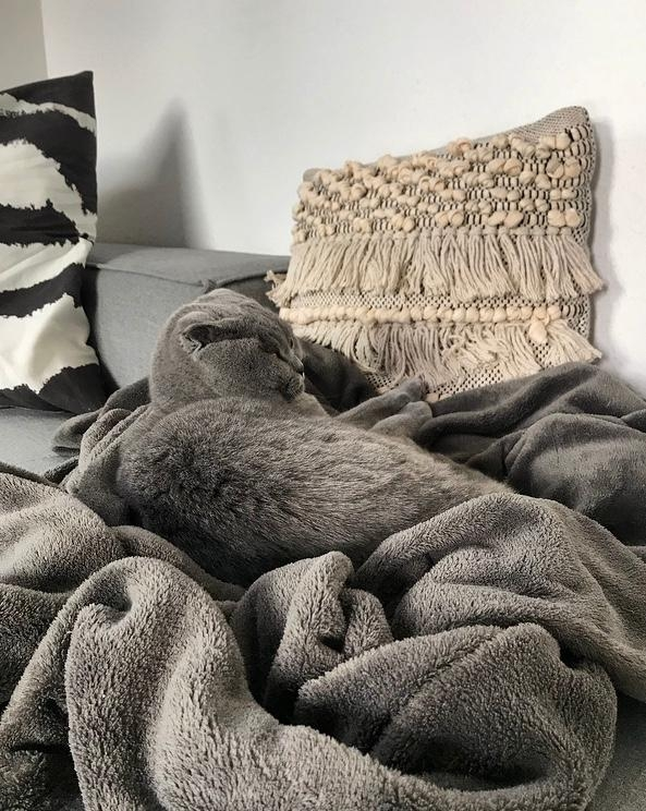 Where is the cat? #knickohr #boho #sundays #grey