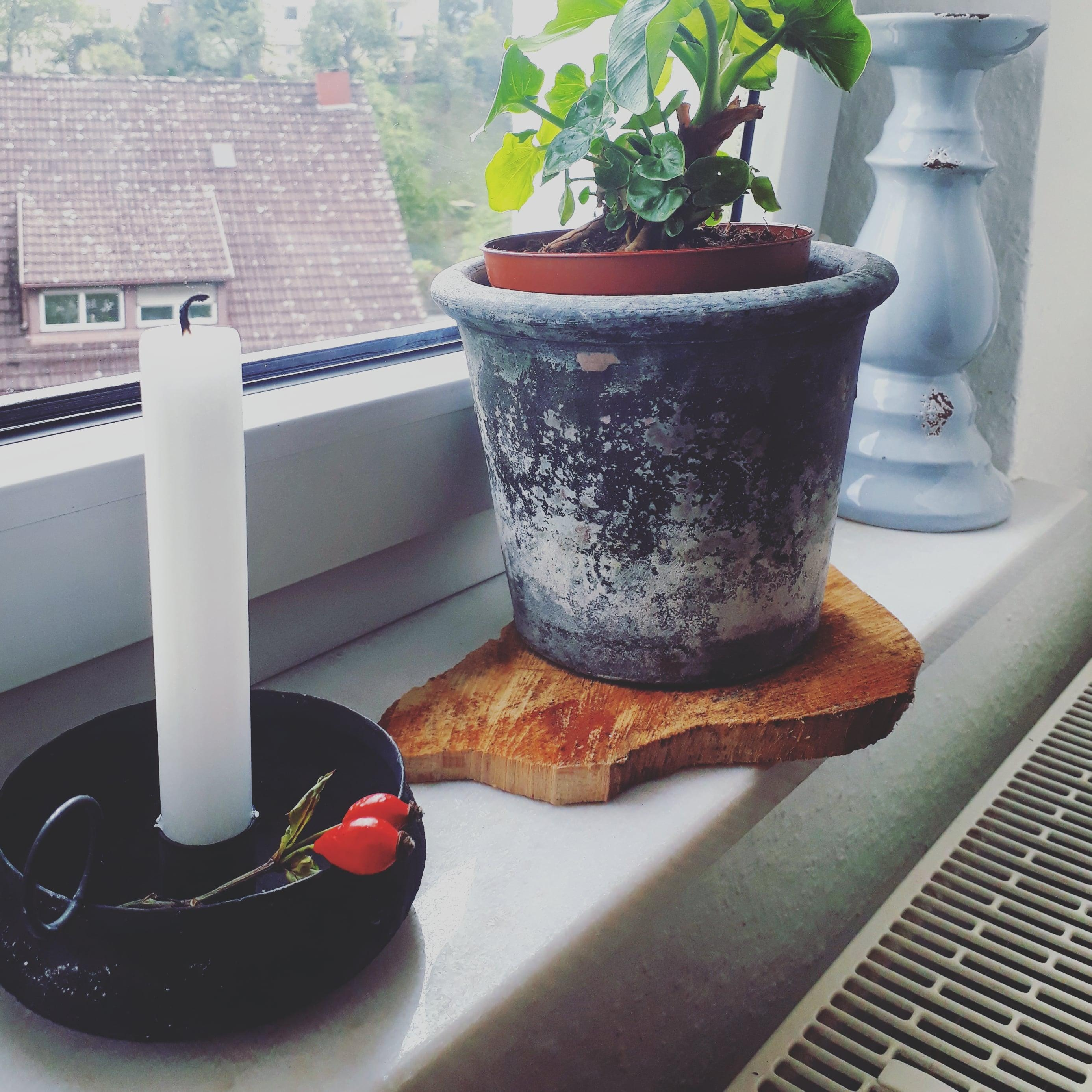 Window sill harmony ♡ 