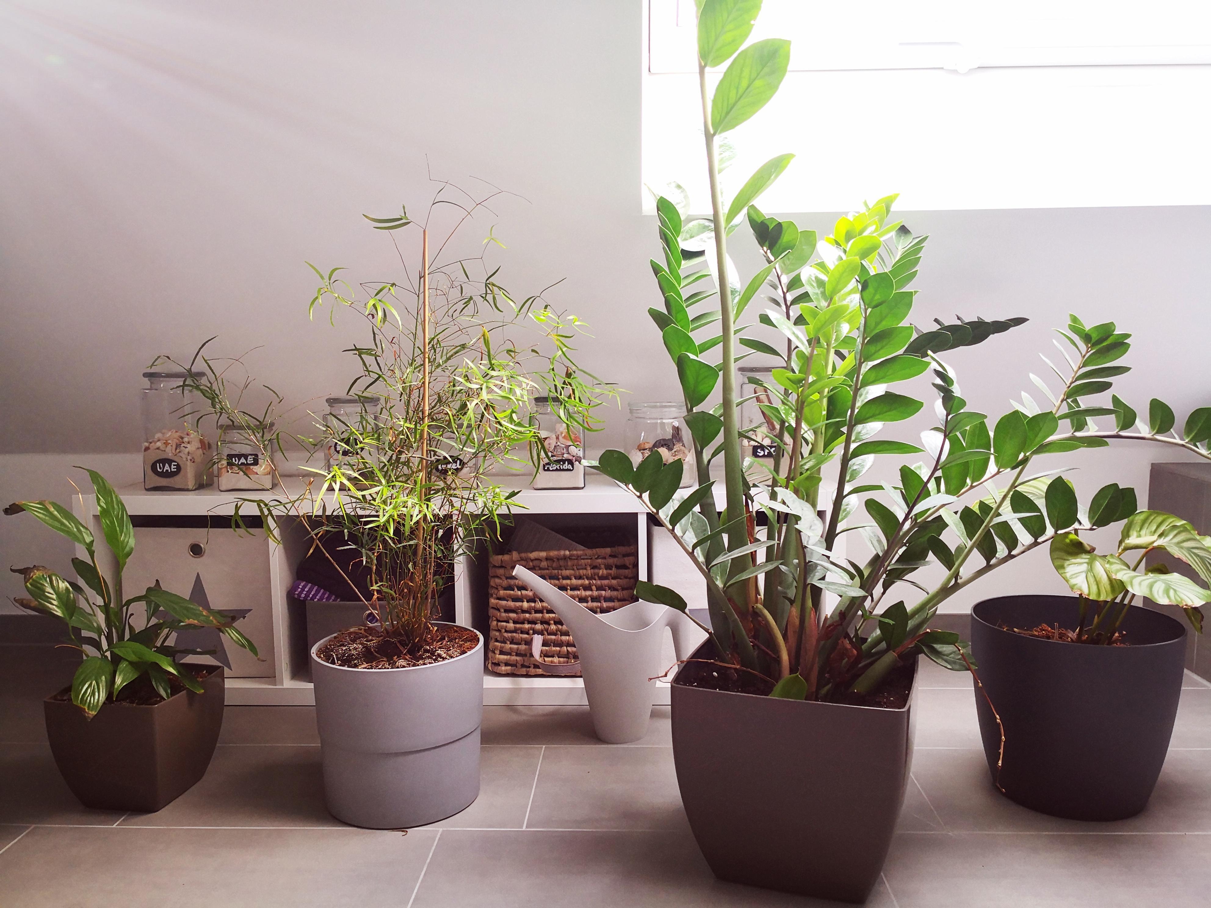 Amazing Badezimmer Taugliche Pflanzen Photos - Moderne ...